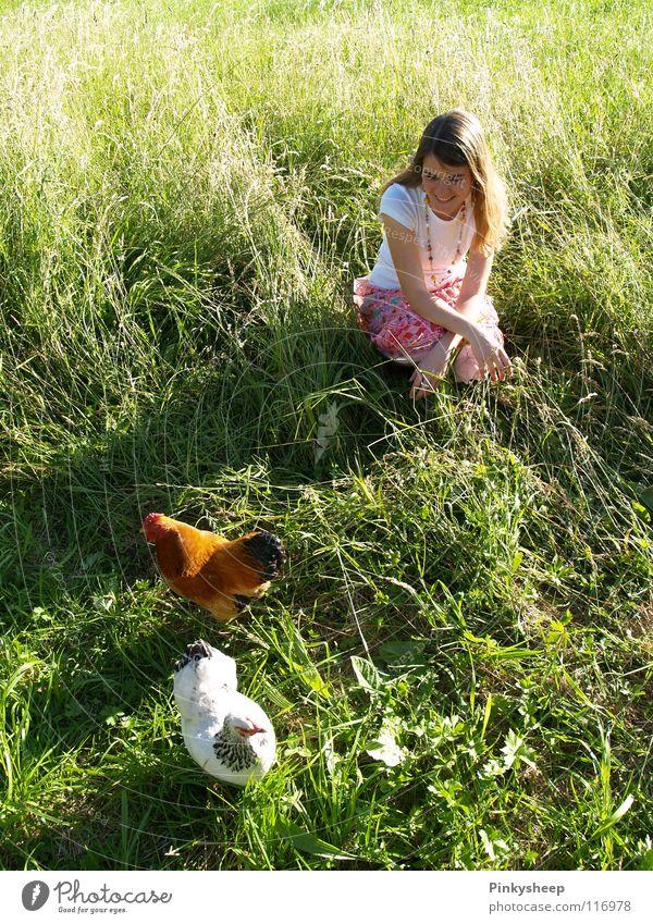 Hahn im Korb Haushuhn grün Wiese weiß Sommer Mädchen Tier Gras saftig genießen Außenaufnahme Luft braun Spielen Frau Vogel orange Freiheit unbeschwehrt