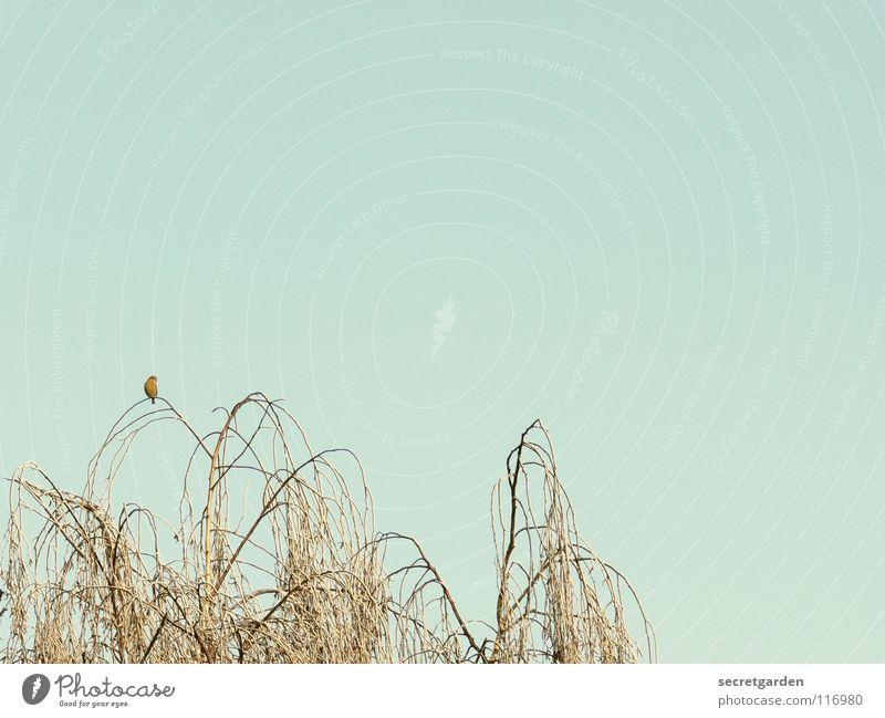 zurückgelassen Vogel Baum laublos Winter Herbst hocken hockend Raum ruhig Erholung Trauer Langeweile Pause gefährlich Birke beobachten dunkel Gemälde trist