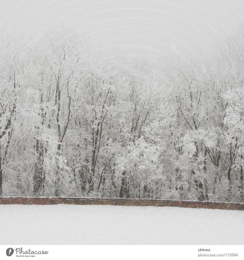 Frost Winter weiß Eis Raureif Wald Park Nebel Einsamkeit Baum horizontal Strukturen & Formen flach kalt einfarbig Mauer Glätte weiß in weiß Schnee