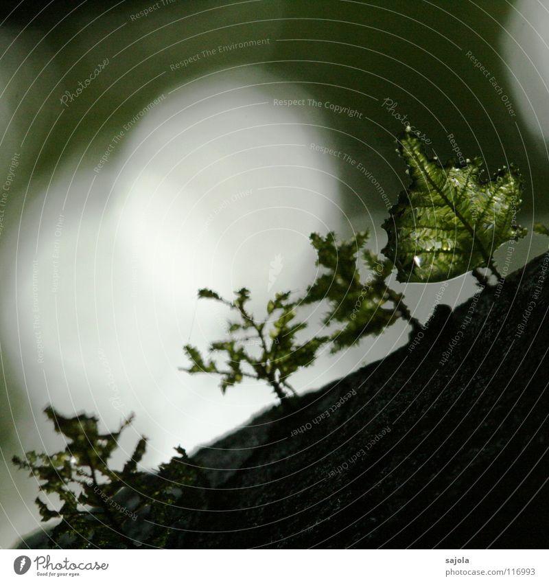...moosiger... Umwelt Natur Pflanze Wasser Wassertropfen Baum Moos Urwald grün Baumrinde Lichtspiel feucht Borneo Lichtpunkt Lichtstimmung Lichtschein