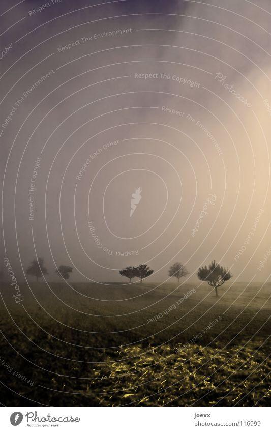 _`|´`|´_`||´_`|´_`|´ Feld Baum braun dunkel Erholung Herbst Idylle Licht Morgen Denken Nebel Nebelwand unklar Obstbaum poetisch Romantik ruhig glänzend