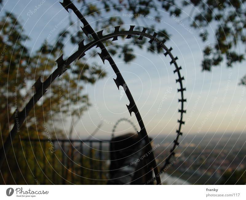free Natur Dresden Makroaufnahme Stacheldraht