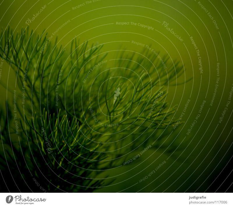 Wiese grün Pflanze Wachstum gedeihen Umwelt nah weich schön Sommer Farbe Natur