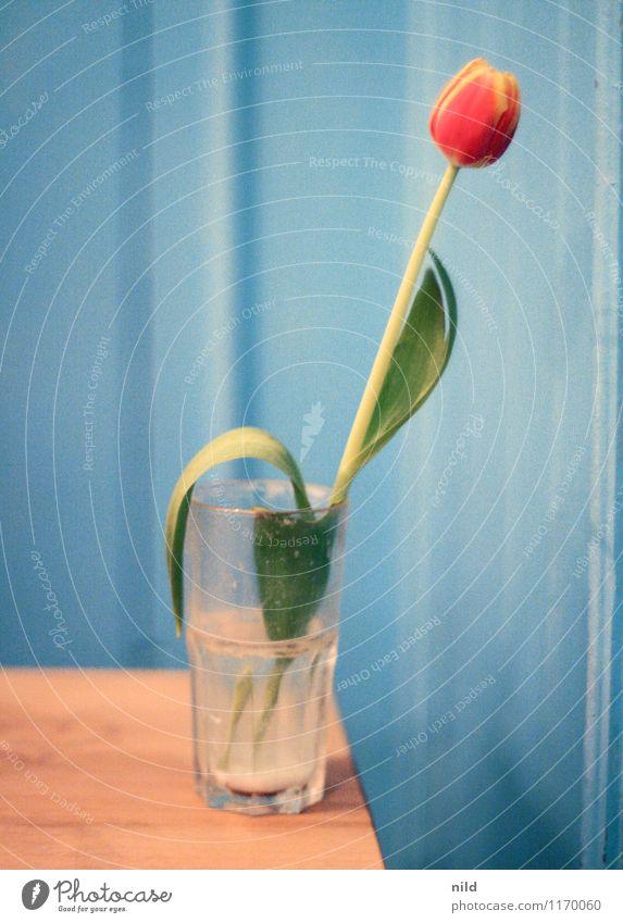 Kneipenschönheit blau Pflanze Blume rot Holz Wohnung Raum Häusliches Leben Dekoration & Verzierung Glas Restaurant Bar Tulpe Nachtleben ausgehen