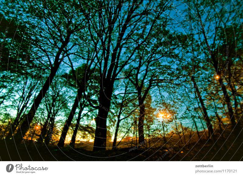 Abend Nacht Abenddämmerung Nachthimmel Farbverlauf Sonnenuntergang Wald Baum Baumstamm Ast Zweig Laterne Straßenbeleuchtung Lampion Beleuchtung Romantik