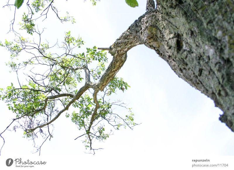 Unterm Baum 2 Himmel blau Blatt Wolken Ast Baumrinde Geäst
