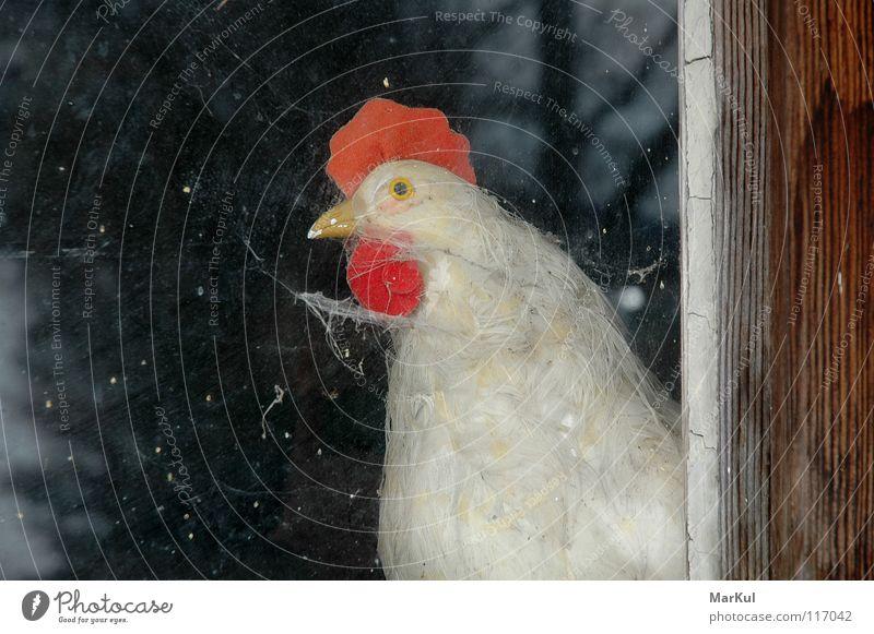 Huhn am Fenster Haushuhn Aussicht Tier Bauernhof Landwirtschaft Vogel Gefügel Blick nach draußen
