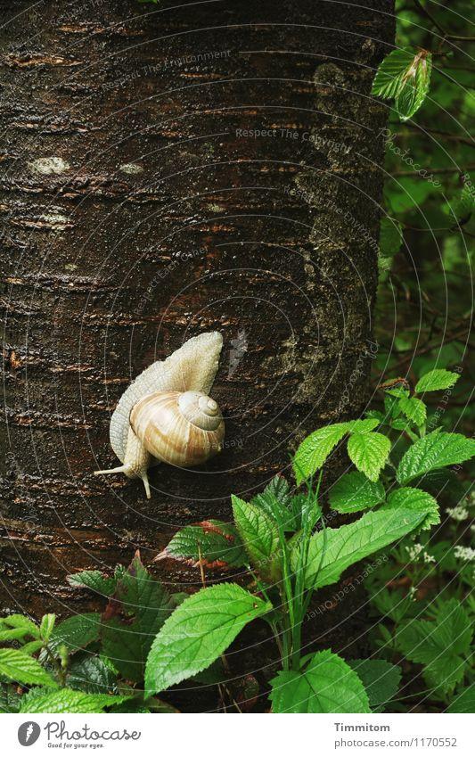 Weinbergsuche. Umwelt Natur Pflanze Tier Baum Wald Schnecke Weinbergschnecken 1 natürlich grün Gefühle Willensstärke Baumstamm Blatt Schneckenhaus Baumrinde