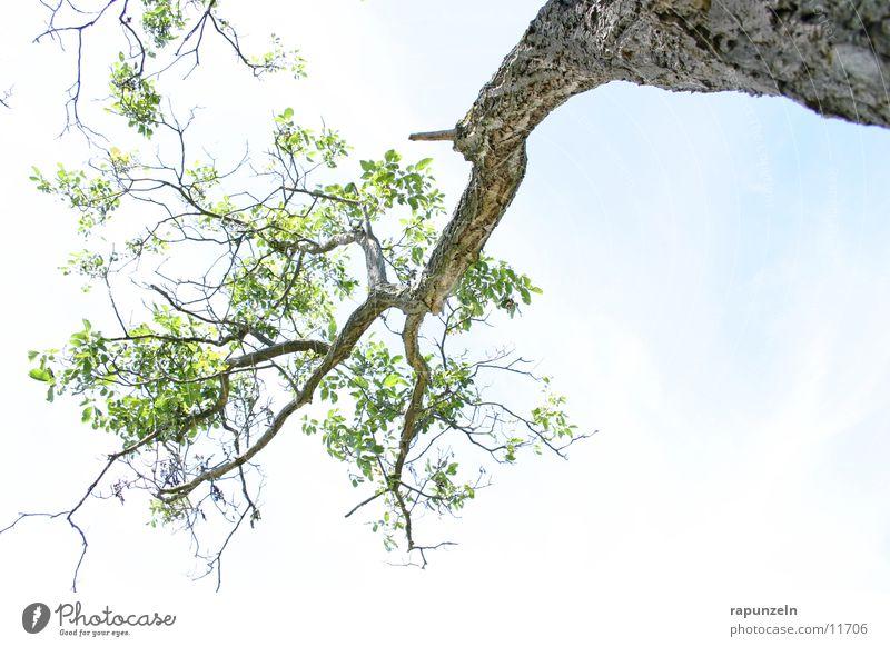 Unterm Baum Blatt Wolken Gegenlicht Geäst Baumrinde Ast Himmel blau