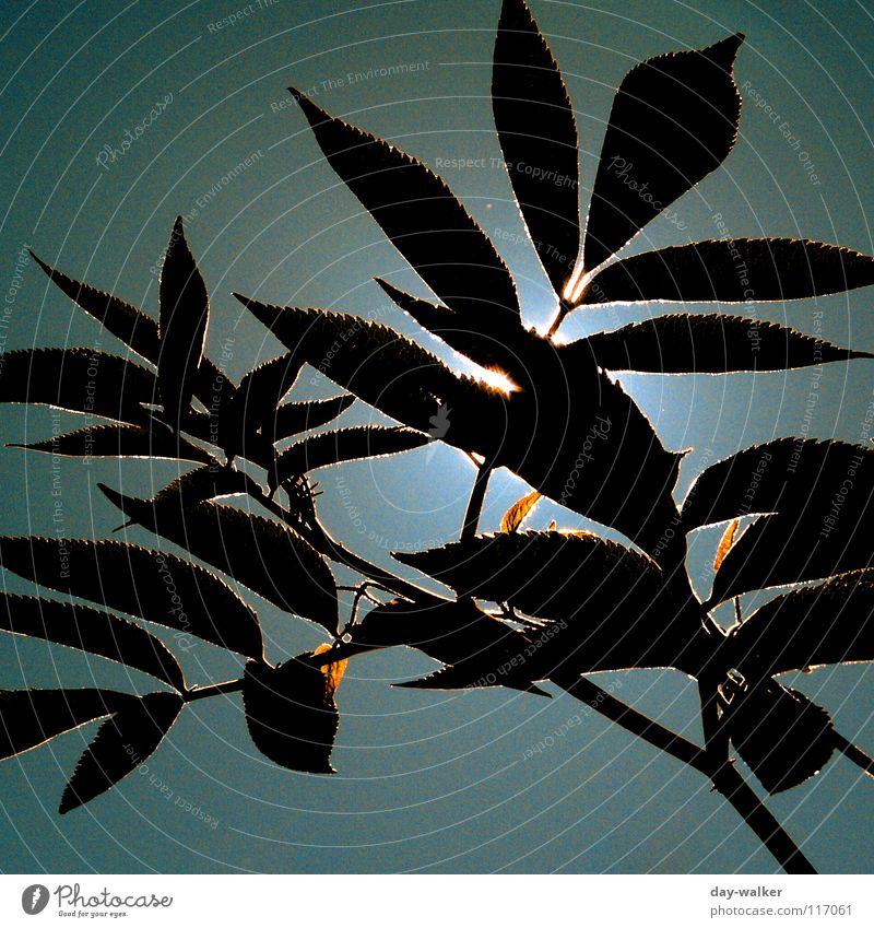 Summerfeelings III Natur Sonne grün blau Pflanze rot Sommer Blatt Erholung Freiheit Wärme Stimmung Beleuchtung Charakter blenden schimmern