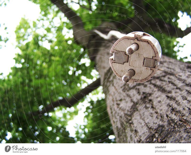 Ökostrom Baum Stecker Elektrizität ökologisch Baumrinde Baumkrone Blatt grün Sommer Erneuerbare Energie lustig assoziativ Anschluss hängen obskur Ast Zweig