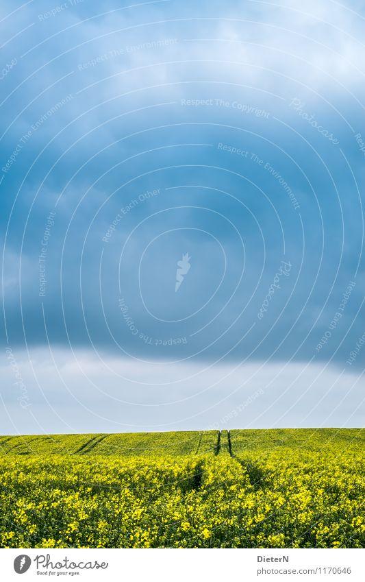 Spuren Umwelt Natur Himmel Wolken Gewitterwolken Frühling Wetter Pflanze Feld blau gelb schwarz Raps Rapsfeld Farbfoto mehrfarbig Außenaufnahme Menschenleer