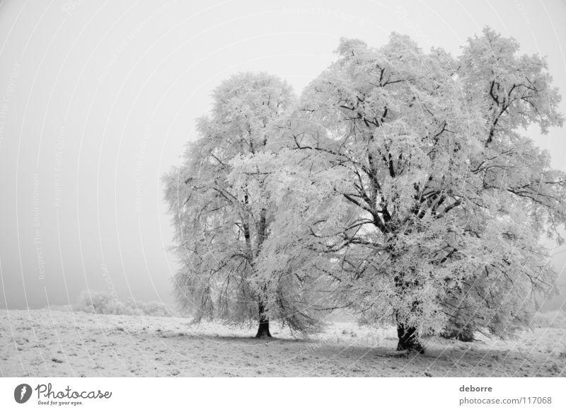Verschneite Winterlandschaft mit drei Bäumen auf einem Feld. Baum Wald weiß Schwarzweißfoto hell Pflanze Plan Schnee