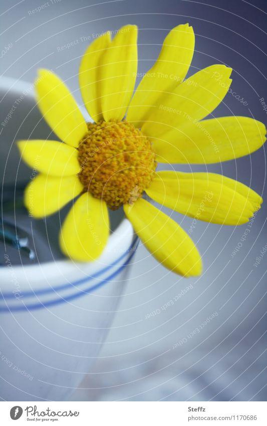 kleines gelbes Blümchen in einem Becher Schnittblume Dekoration dekorativ gelbe Blume gelbe Blüte Blütenblätter Zierpflanze blühende Blume erblühen Herbstblume