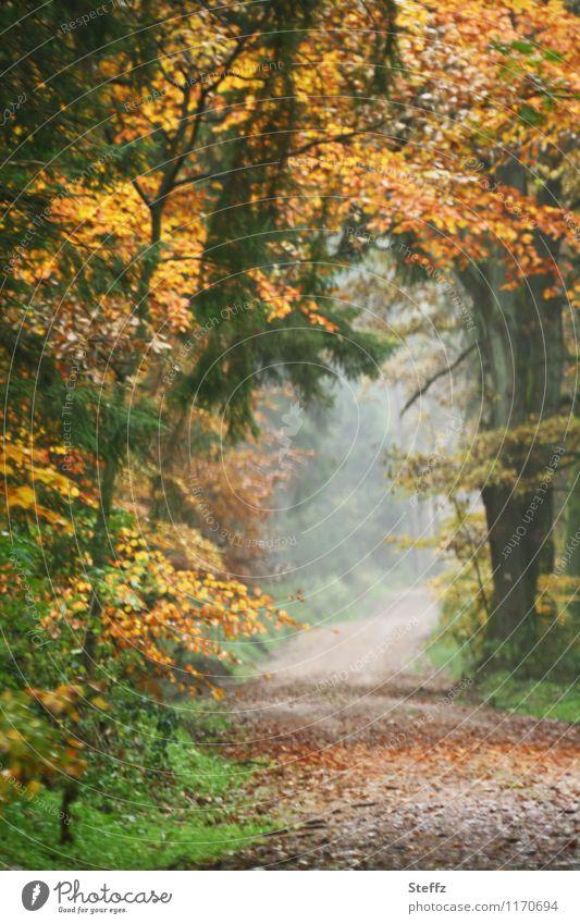 ein Herbsttor im Oktoberwald Herbstwald Waldbaden Nebel malerisch Herbstbäume Waldweg Herbstlaub Herbstgefühle Nebelstimmung nebelig neblig Waldstimmung