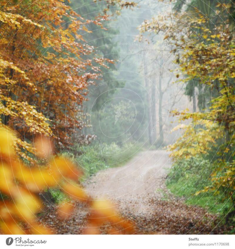 Herbsttor II Natur schön Baum Landschaft Blatt ruhig Wald gelb Wege & Pfade Nebel Fußweg Wandel & Veränderung Herbstlaub herbstlich Oktober
