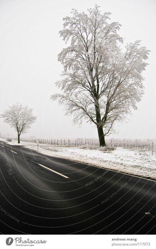 Farblose Welt Natur weiß Baum Winter schwarz Einsamkeit Ferne Straße kalt Schnee Landschaft Feld leer trist Ast Raureif