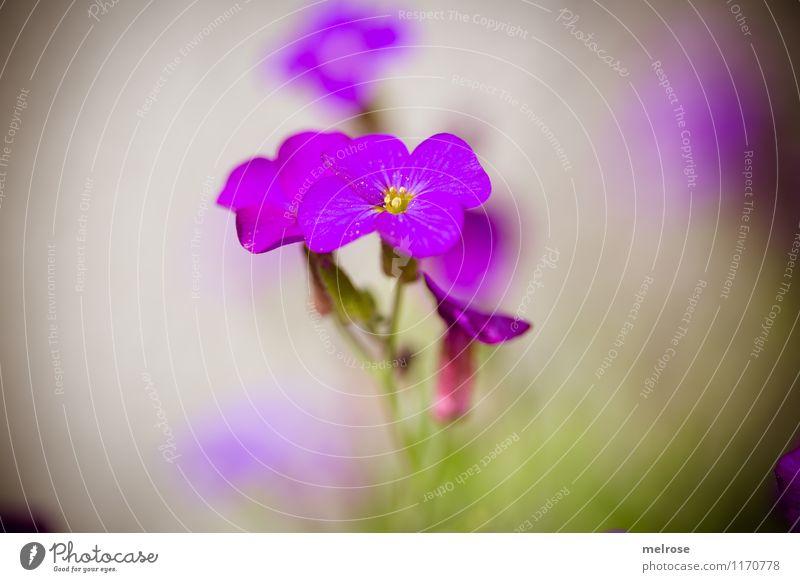 300 !!! elegant Stil Design Frühling Schönes Wetter Blume Gras Blatt Blüte Wildpflanze Rosengewächse Garten Farbfleck Eyecatcher zart Blühend Erholung leuchten