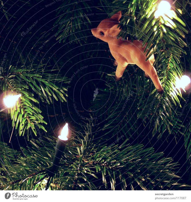 who killed bambi? Reh Rehkitz braun Tier Kerze Licht Tanne Tannennadel grün Physik weiß weich Weihnachtsdekoration Schmuck Stimmung Gefühle Raum besinnlich