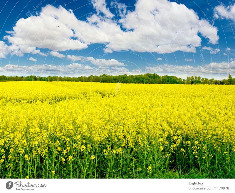 Raps du hast die Gans gestohlen Natur blau Pflanze Erholung gelb natürlich Feld Schönes Wetter Nutzpflanze