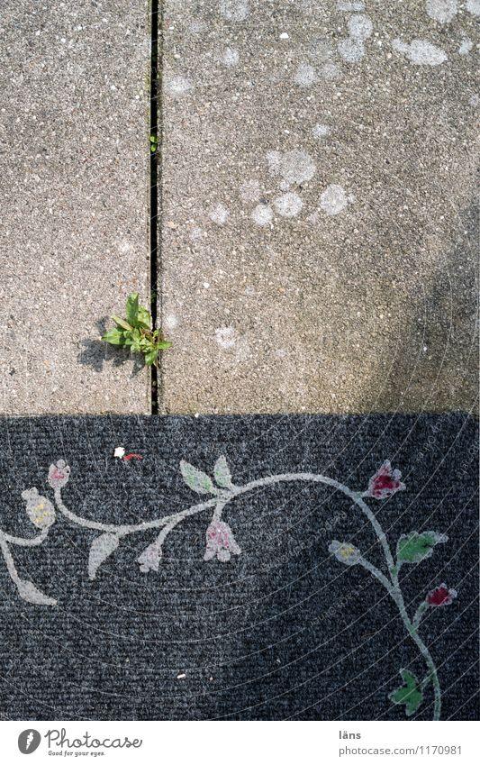 grün gewinnt Haus Garten Pflanze Blatt Terrasse Fußmatte Beton Ornament Wachstum Kraft Willensstärke Beginn Erwartung Betonplatte Unkraut Ranke Außenaufnahme