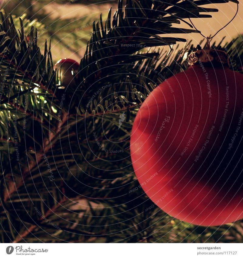 juhuuu es weihnachtet schon wieder! Tanne Tannennadel Christbaumkugel braun grün rot Physik festlich weich Weihnachtsdekoration Schmuck Stimmung Gefühle