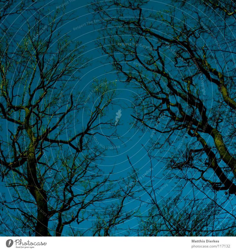 Wald alt Himmel Baum grün blau Winter Wald dunkel Herbst Tod Traurigkeit Angst Trauer Sträucher bedrohlich Ast