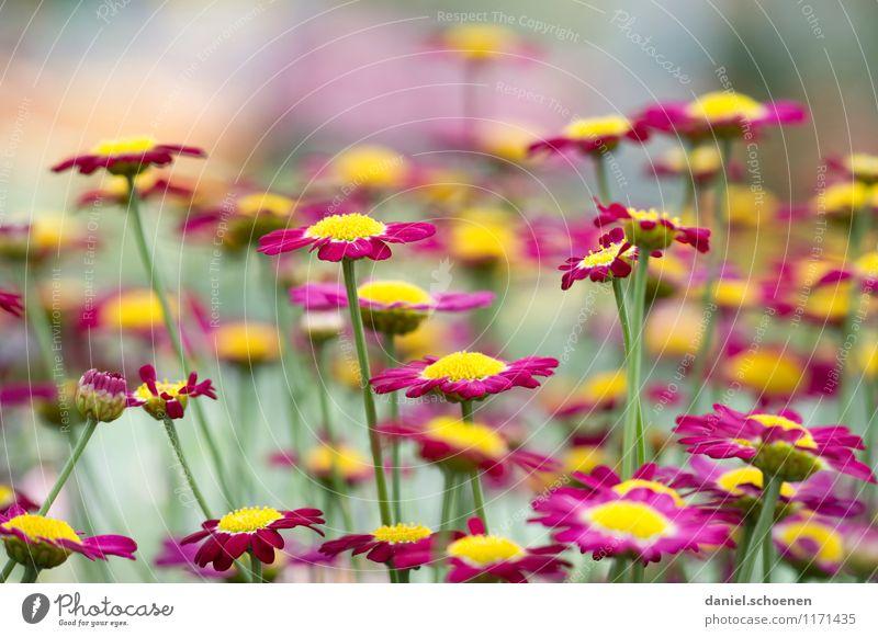 noch ein Blümchenbild Natur Pflanze Sommer Blume Blüte gelb grün violett mehrfarbig Menschenleer