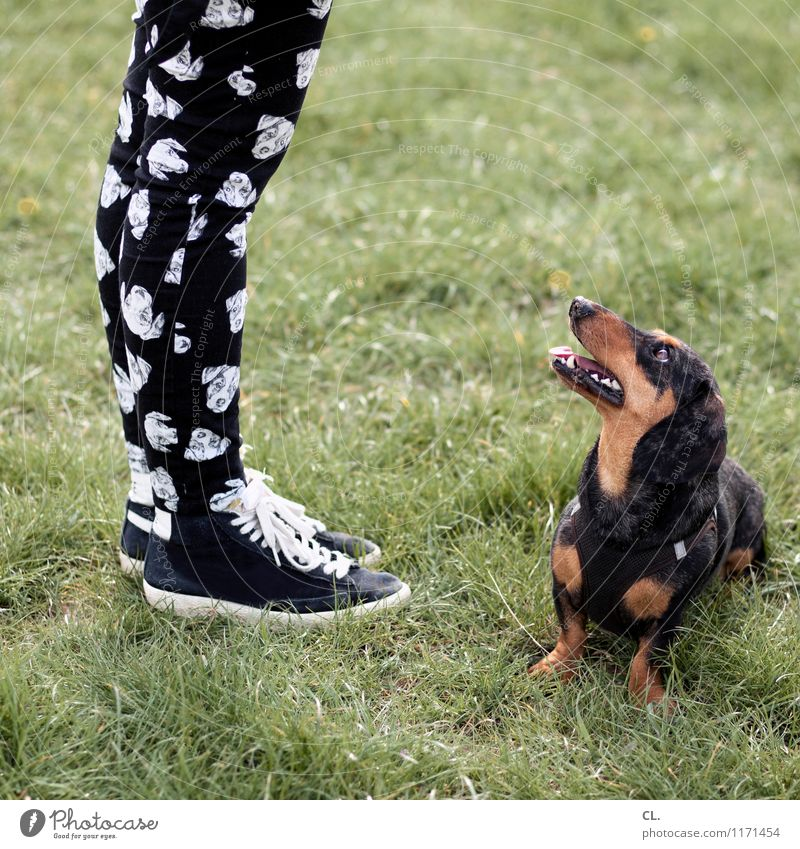 hund trifft hose Spielen Mensch feminin Erwachsene Leben Beine Fuß 1 Gras Wiese Mode Hose Turnschuh Tier Haustier Hund Tiergesicht Dackel beobachten