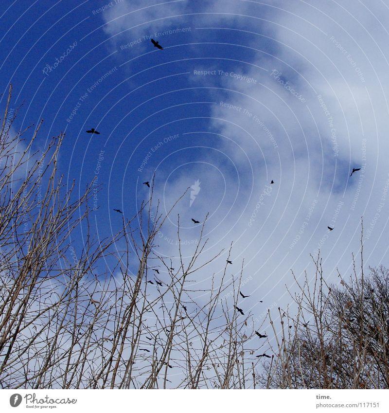 einfach mal abhaun Himmel Ferien & Urlaub & Reisen blau Pflanze Wolken Vogel fliegen hoch frei frisch Sträucher Vergänglichkeit Lebensfreude Unendlichkeit