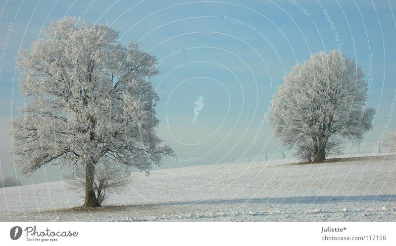 Winter-tr (b) äume kalt Eis Baum Spaziergang Wege & Pfade weiß Schnee bedecken Schwabenland Alm blau hell Ferne