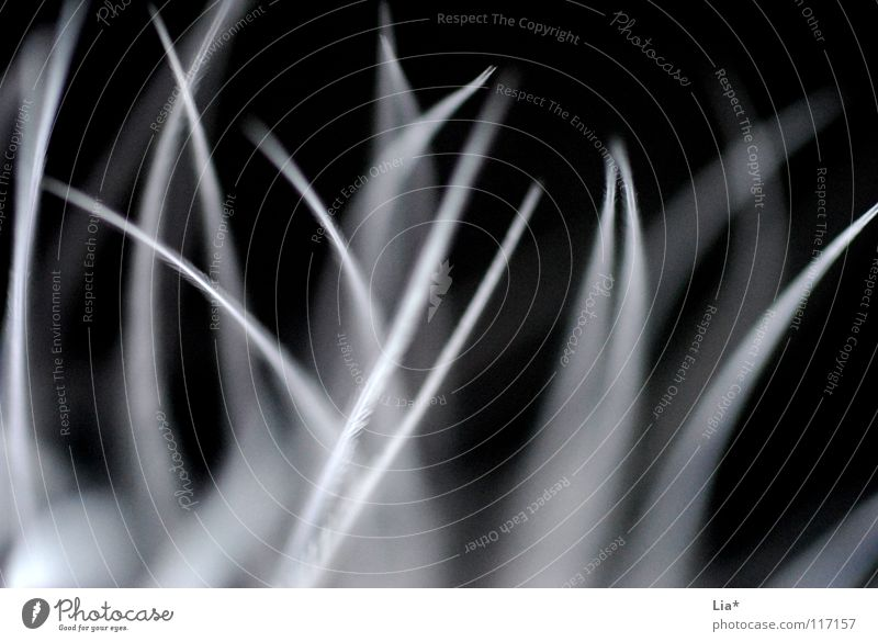 Feder weiß schwarz Spielen klein weich Feder Dekoration & Verzierung zart leicht fein sensibel