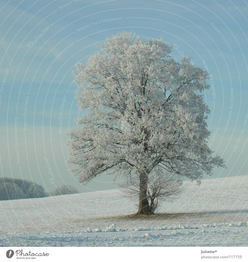 Winter-tr (b) aum schön weiß Baum blau Winter Einsamkeit Ferne kalt Schnee Eis Frost Spaziergang