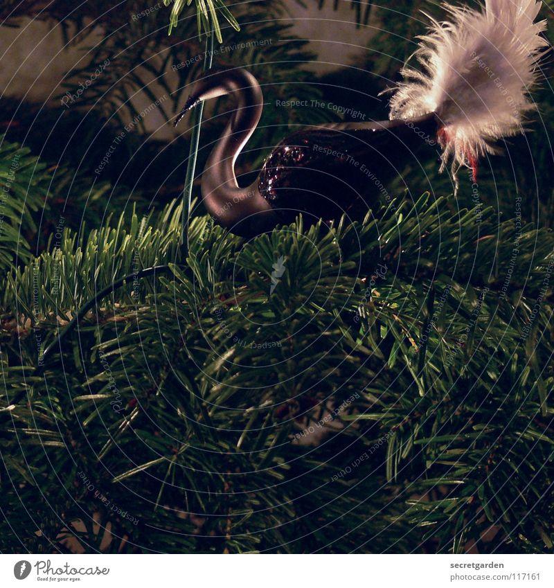 juhuuu es weihnachtet schon wieder! Natur Weihnachten & Advent grün weiß Tier dunkel schwarz Wärme Gefühle Beleuchtung Feste & Feiern Kunst Vogel Stimmung