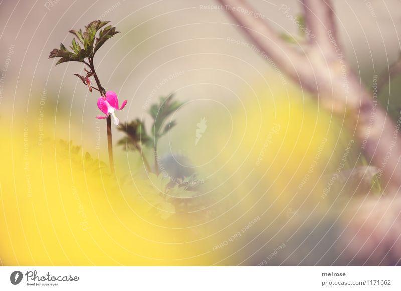Suchbild Pflanze schön grün Baum Erholung Einsamkeit Blatt gelb Frühling Blüte Garten Stimmung braun rosa träumen leuchten