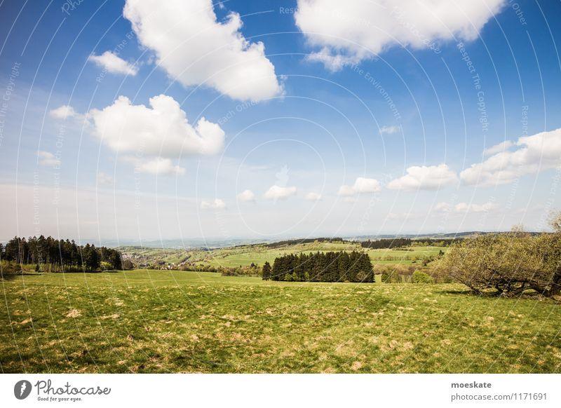 Auf dem Vogelsberg Landschaft Himmel Wolken Sommer Schönes Wetter Baum Gras Feld Hügel Berge u. Gebirge blau grün Hessen Spaziergang Ausflug Natur Farbfoto