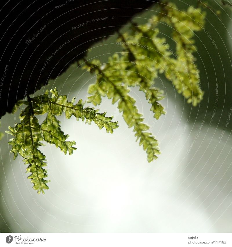 ...am moosigsten!? Natur grün Pflanze Umwelt Wachstum Urwald feucht Tau Moos Lichtspiel Baumrinde Lichtpunkt Lichtbrechung Lichtschein Borneo Lichtstimmung