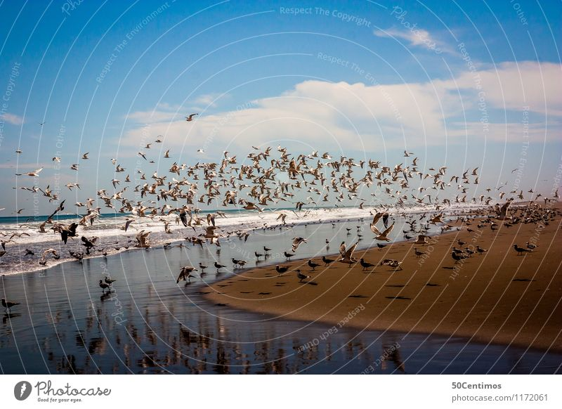 Vögel am Strand Sommer Erholung Meer ruhig Wolken Ferne Küste Vogel Horizont Wellen Wildtier Tiergruppe Schönes Wetter Frieden Möwe