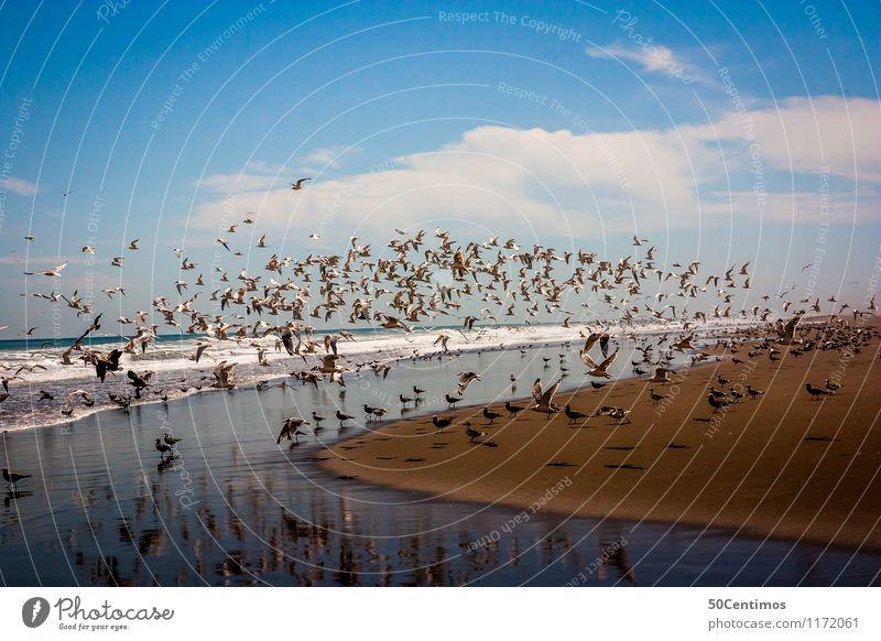 Vögel am Strand Sommer Sommerurlaub Meer Wolken Horizont Schönes Wetter Wellen Küste Sandstrand Arequipa Peru Wildtier Vogel Möwe Tiergruppe Schwarm Erholung