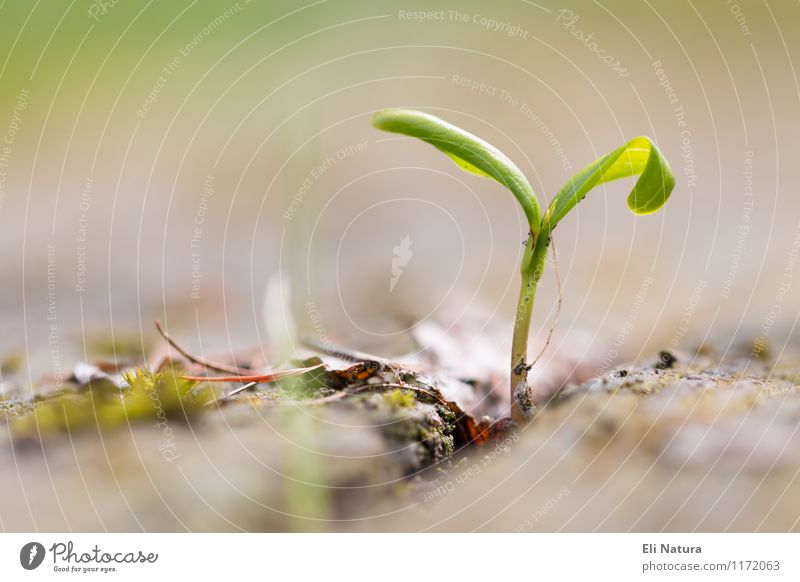Durchbruch Natur Pflanze Erde Frühling Schönes Wetter Gras Blatt Grünpflanze Garten Park Wiese Blühend kämpfen ästhetisch Erfolg braun mehrfarbig gelb grün rot