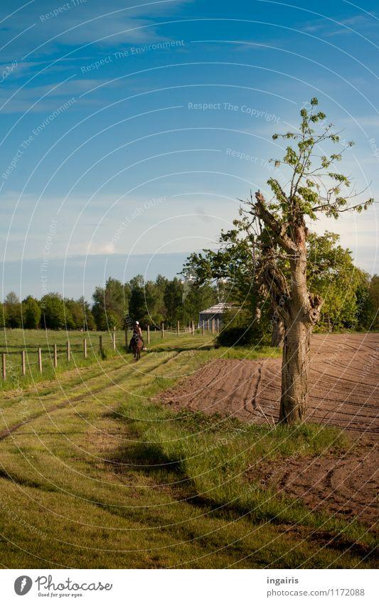 Ritt in den Frühling Mensch Himmel Natur blau Pflanze grün Baum Erholung Landschaft Wolken Umwelt natürlich Gras Wege & Pfade Stimmung