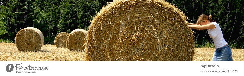 Rolle der Frau in der heutigen Gesellschaft ; ) Frau Heu Arbeit & Erwerbstätigkeit Feld Landwirtschaft Amerika anstrengen Rolle Stroh drücken Heuballen