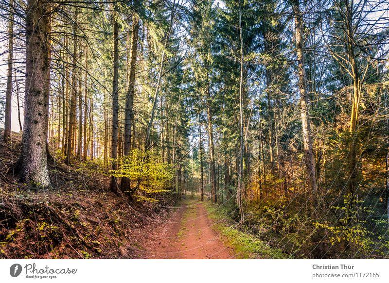 Sonnenschein im Wald Wellness Leben harmonisch Wohlgefühl Zufriedenheit Sinnesorgane Erholung ruhig Meditation Ferien & Urlaub & Reisen Tourismus Ausflug