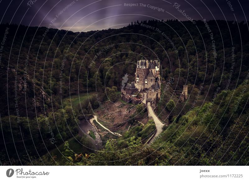 Landeanflug Wald Burg oder Schloss Bauwerk Sehenswürdigkeit Denkmal alt gigantisch groß gruselig historisch hoch reich retro braun grün Idylle Farbfoto