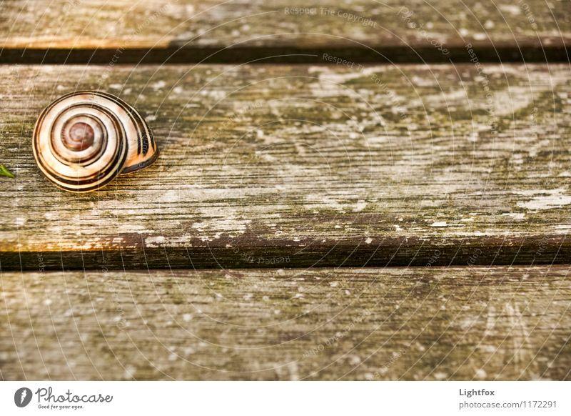 Schrecklich schnecklich Tier Stimmung Hoffnung verstecken Haustier Schnecke Holztisch zurückziehen