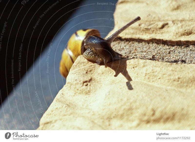 Fast geschafft Tier gelb Politische Bewegungen Neugier Klettern Haustier krabbeln Schnecke langsam ungewiss schleimig