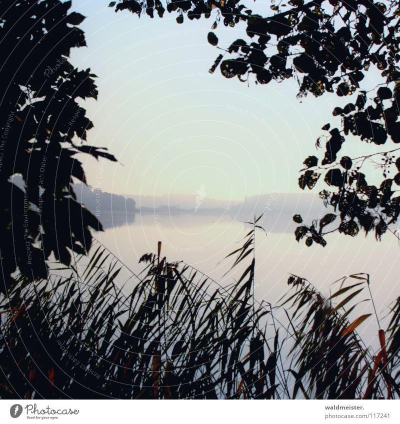 Morgens am See Wasser Baum Sommer Herbst Traurigkeit Nebel Romantik Schilfrohr Morgennebel