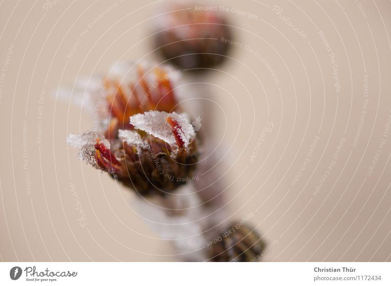 Erfroren Natur Ferien & Urlaub & Reisen Pflanze schön Baum Blume Einsamkeit Blatt Winter Umwelt Blüte Gefühle Schnee Lifestyle glänzend Eis