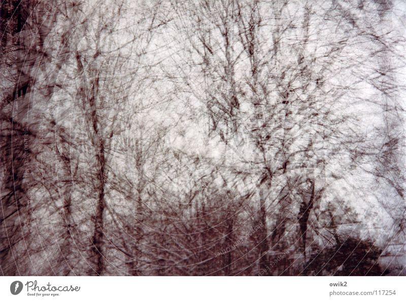 Muß zum Optiker Winter Kunst Natur Baum Bewegung frei Geschwindigkeit viele verrückt wild bizarr chaotisch Lebensfreude skurril Surrealismus Geäst