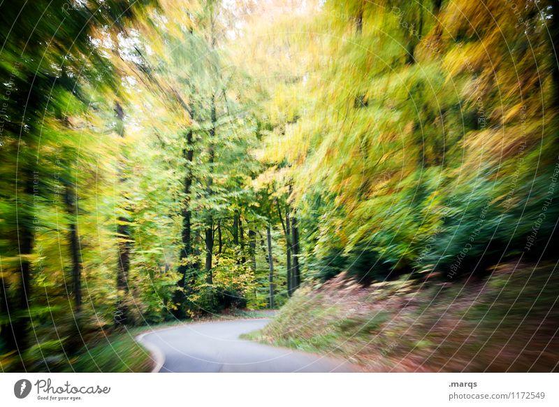 Bleifuß Ausflug Natur Landschaft Sommer Herbst Wald Verkehr Autofahren Straße Kurve Geschwindigkeit Stimmung Pünktlichkeit Stress Bewegung bedrohlich